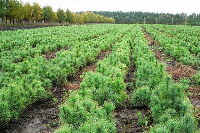 Курс на озелення